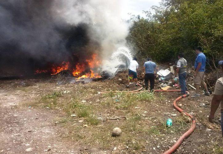 De acuerdo con el gerente de la Conafor, en lo que va del año se han presentado 10 incendios. (Claudia Martín/SIPSE)
