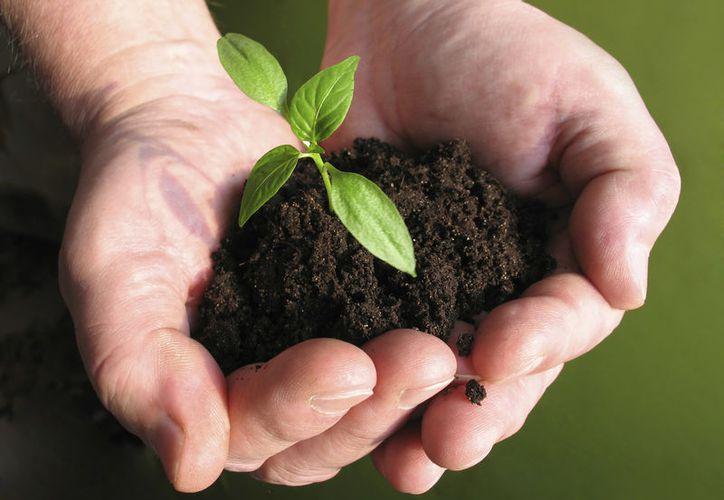Reactivarán el Programa de Ordenamiento Ecológico Local. (Contexto/Internet)