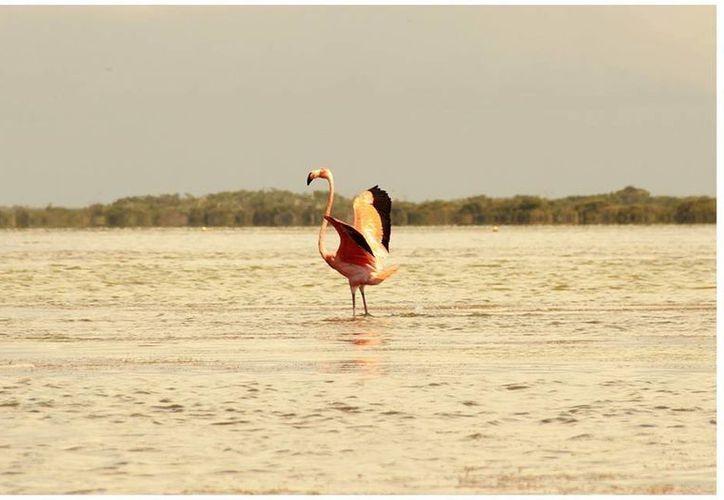 Presentan 11 atractivos destinos de los estados de Yucatán y Quintana Roo. (Cortesía/SIPSE)