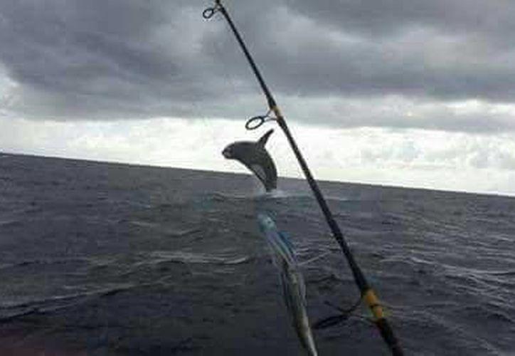 Una orca fue vista cerca de las costas de Isla Mujeres. (Foto de contexto)