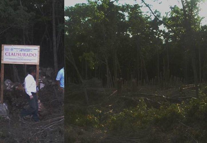 La devastación de la zona natural protegida es más que evidente, por lo que fue puesta bajo resguardo federal. (profepa.gob.mx)