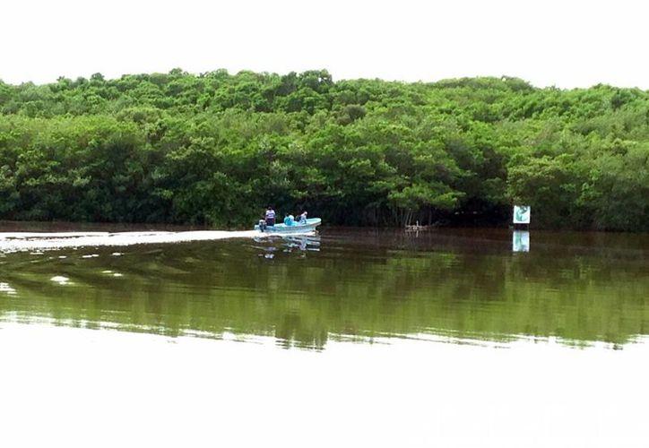 Los cenotes costeros de 'El Corchito' son algunos de los atractivos más visitados por los turistas en Progreso. (Milenio Novedades)