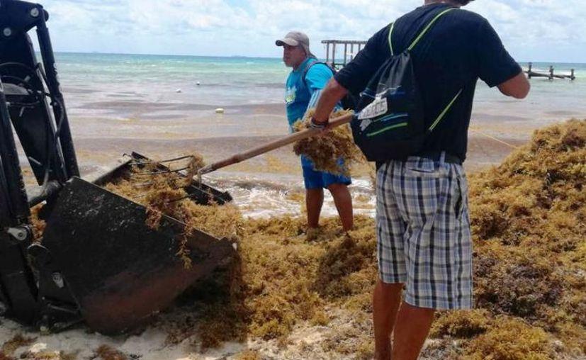 Según medios nacionales, una mancha de sargazo cuatro veces más grande que el tamaño de Mérida estaría esparciéndose en 120 km de playas yucatecas. (Archivo/Sipse)