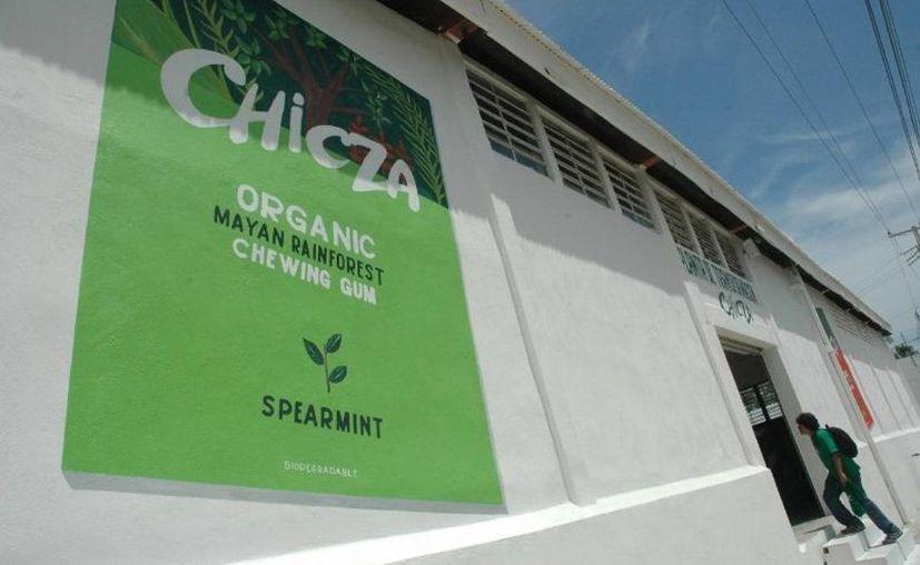 La producción de chicle orgánico en Quintana Roo ayuda a la conservación de la selva. (Edgardo Rodríguez/SIPSE)