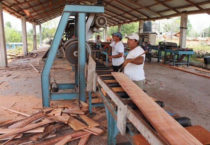 La mayor parte de la producción entre maderas preciosas y tropicales tiene destino en el mercado nacional. (Edgardo Rodríguez/SIPSE)