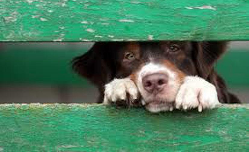 En un estado de Estados Unidos los animales maltratados ya podrán ser defendidos por un abogado. (Mis animales)