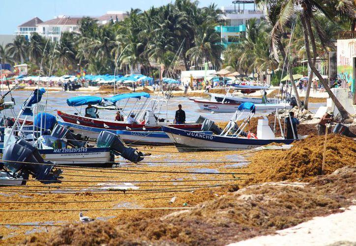 Los peces también se han visto afectados por esta situación. (Foto: Octavio Martínez/SIPSE).