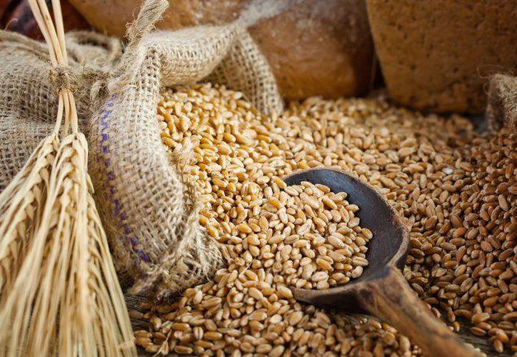 La cebada sirve para la preparación de bebidas como el whisky y la cerveza. (Los Sabores de México).
