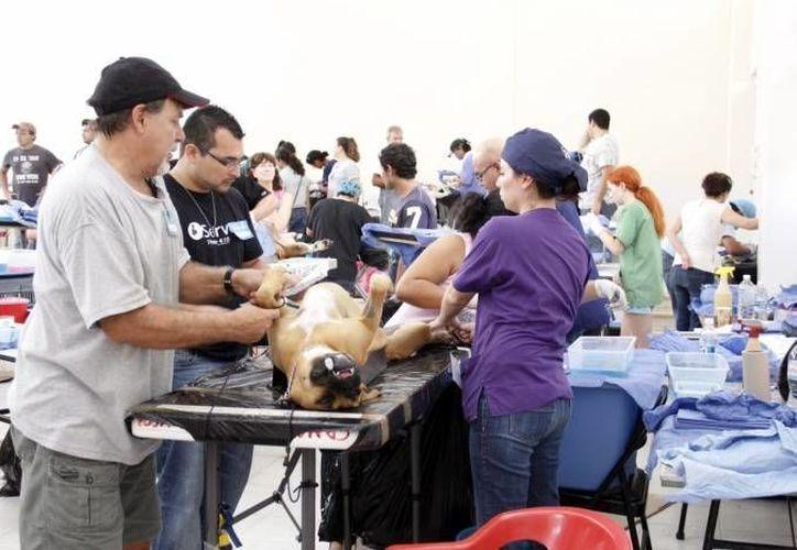 Las sanciones fueron aplicadas a tres tiendas de un mismo negocio de mascotas. (SIPSE/Foto de contexto)