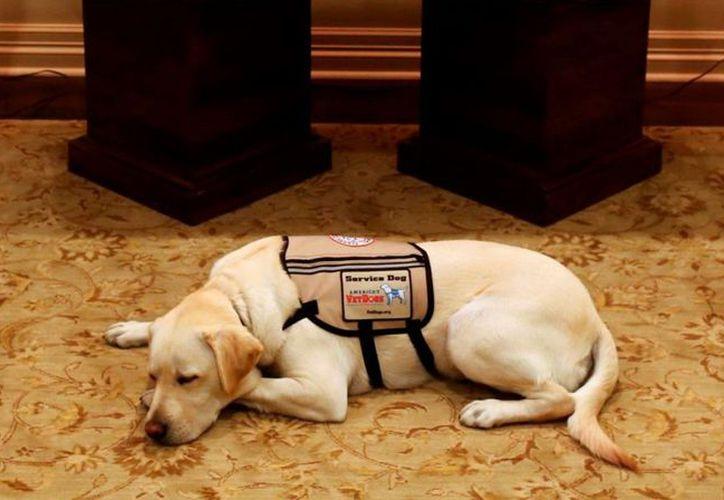 Sully, el perro del falecido expresidente George Bush, fue captado junto al ataúd de su dueño. (Twitter)