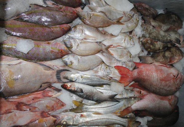 La pesca se considerada como una fuente de alimento alternativo para los sectores rurales. (Redacción/SIPSE)