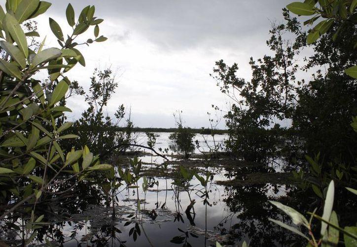 Exhortan a la población para reflexionar sobre el cuidado de los recursos naturales. (Sergio Orozco/SIPSE)