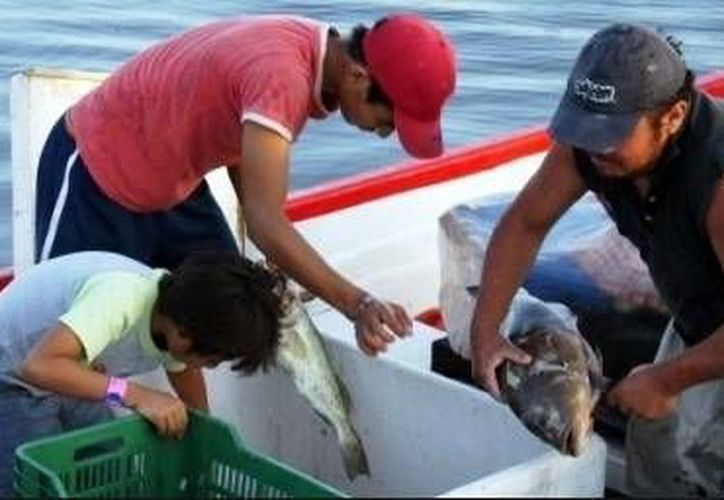 Ante el aumento de precio del mero, los pescadores se llevaron la sorpresa del cierre a la navegación por frente frío que se aproxima. (Milenio Novedades)