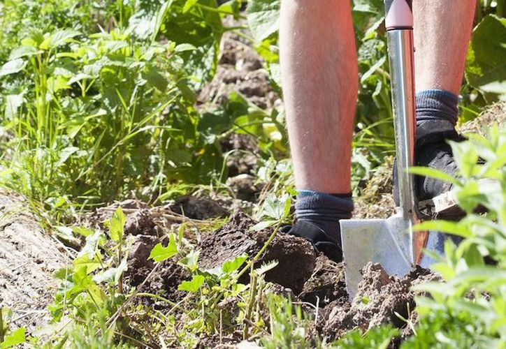 El hombre se encontraba sembrando patatas cuando descubrió los restos.(Internet)