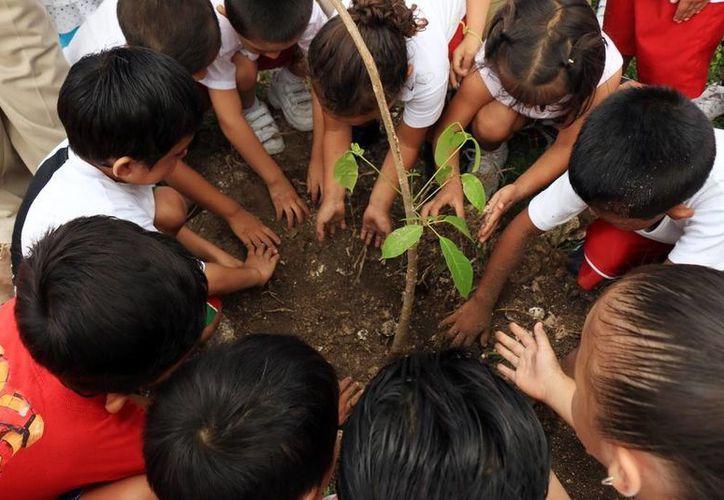 """Los alumnos del jardín de niños """"Edna Sánchez de Rosado"""" sembraron  plantas. (Cortesía/SIPSE)"""