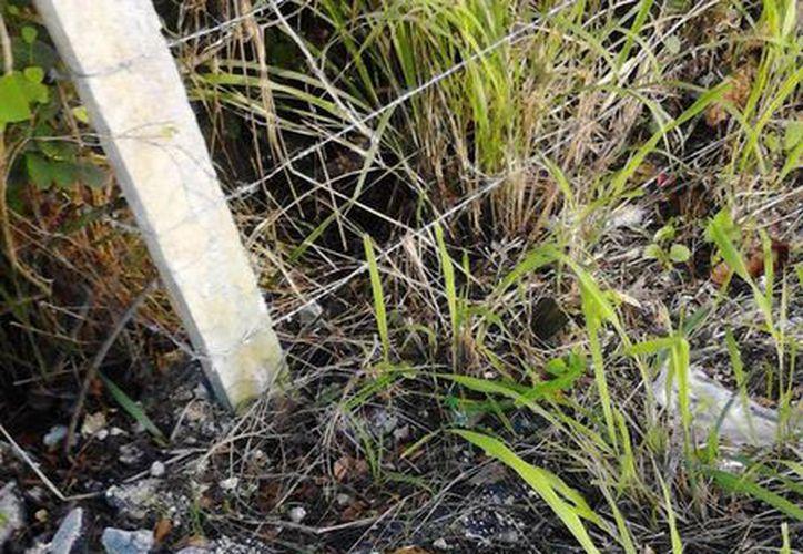 Puede que en días posteriores aparezcan otros animalitos muertos. (Loana Segovia/SIPSE)