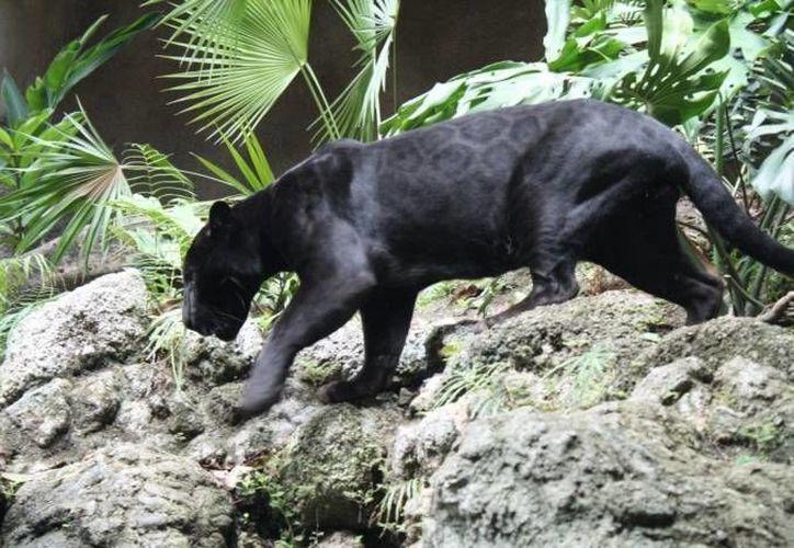 En el perfil de Facebook se publicó que el proyecto ya cuenta con varias autorizaciones importantes para lograr el desarrollo del zoológico. (Juan Palma/SIPSE)