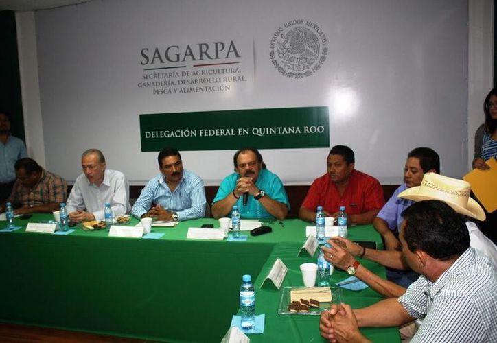 La Sagarpa sufrirá un recorte presupuestal, pero no afectará a Quintana Roo. (Edgardo Rodríguez/SIPSE)