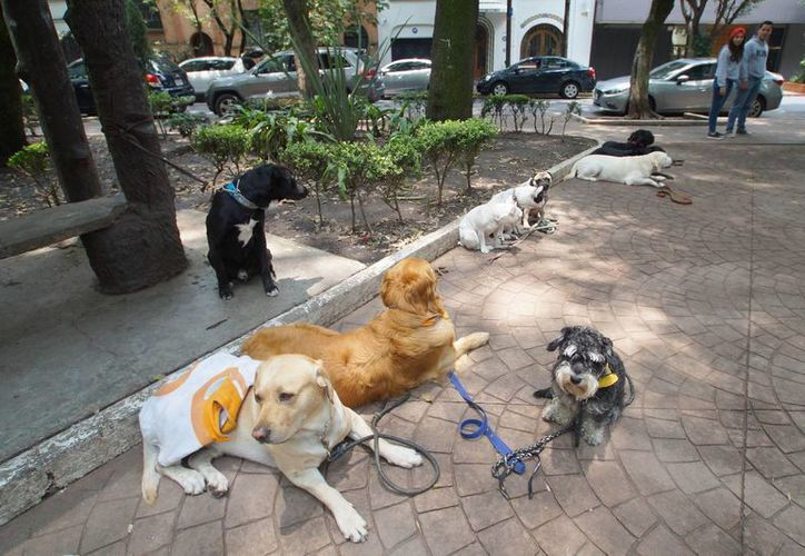 Cuando la gente se ausenta de casa varios días, es importante dejar agua y alimento suficiente a las mascotas para al menos 10 días, recomienda Protección Civil. Imagen de contexto de unos perros en un parque de la Ciudad de México. (Archivo/Notimex)