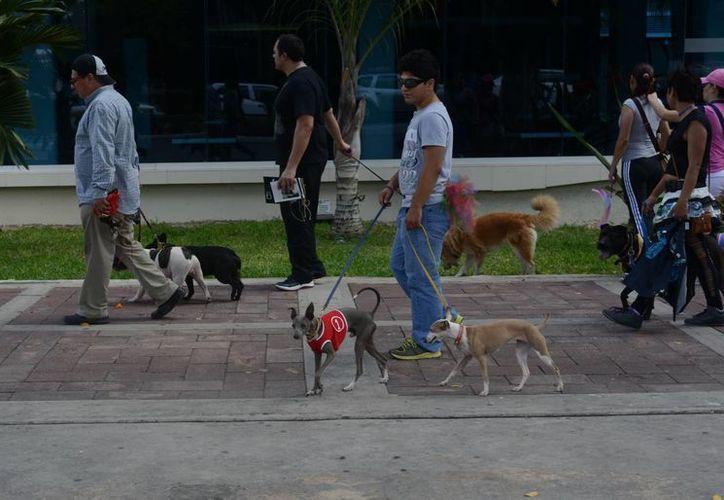 Las mañanas frescas en Mérida quedan en el pasado. (Luis Pérez/SIPSE)