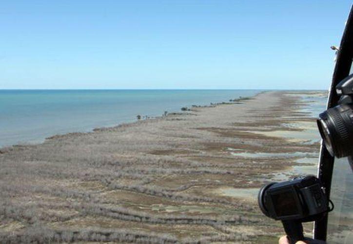 Varias imágenes áreas y fotografías tomadas con satélites confirmaron que los manglares se secaron o perdieron el follaje.  (AFP)