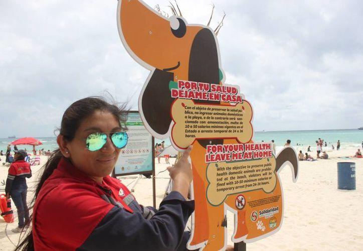 Instalan anuncios para prohibir el acceso a los arenales con perros. (Daniel Pacheco/SIPSE)