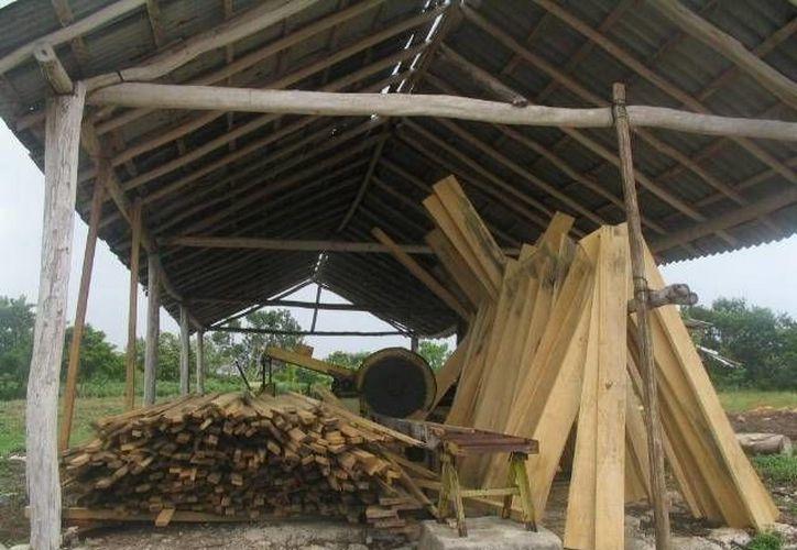 Parte de la madera se utiliza para palapas en las zonas turísticas. (Manuel Salazar/SIPSE)