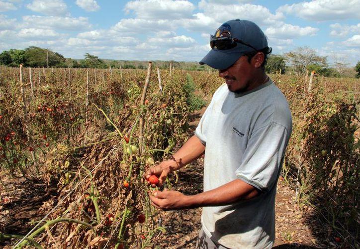 La Uady busca la aplicación de sus posgrados en el campo. (José Acosta/SIPSE)