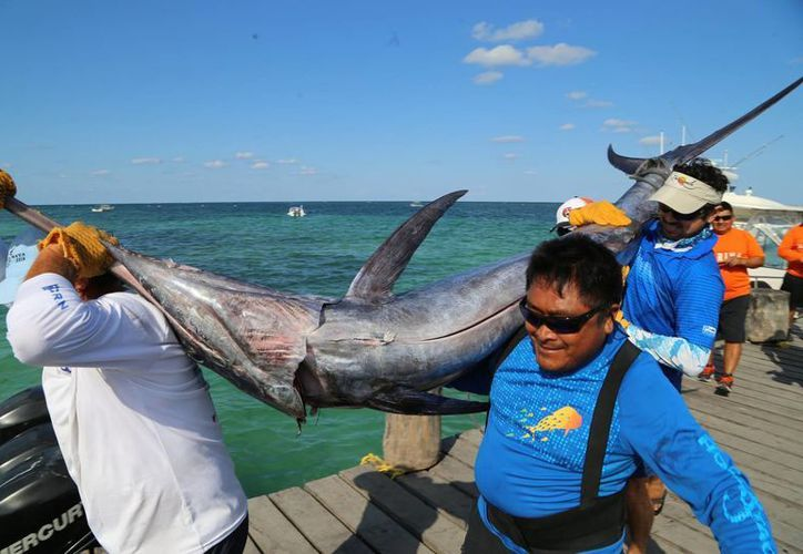 El torneo de pesca Don García Lavín, es uno de los más importantes que se realizan en Q. Roo. (Redacción/SIPSE)