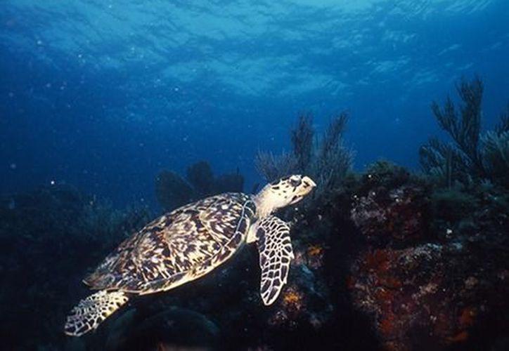 La medida se toma para proteger el desove, alimentación y descanso de las tortugas. (Foto: Redacción)