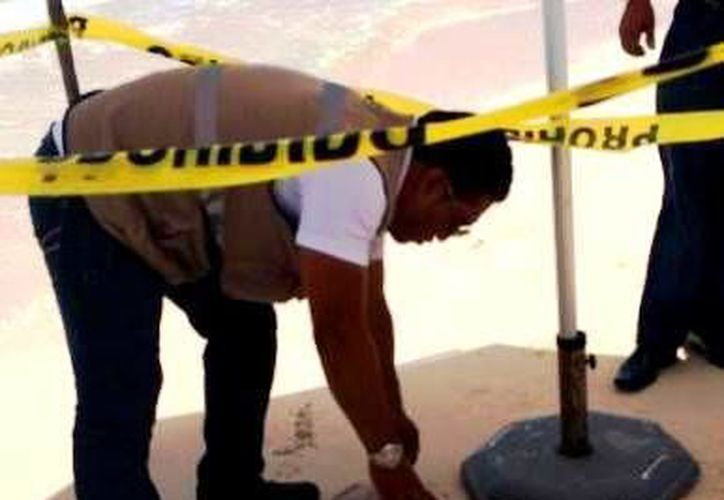 El saqueo y captura de tortugas marinas es evaluado por un comité especializado. (Daniel Pacheco/SIPSE)