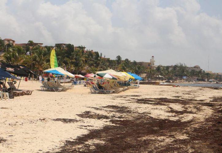 El mal olor y el aspecto del sargazo alejan a los turistas de las costas de Playa del Carmen. (Adrián Barreto/SIPSE)
