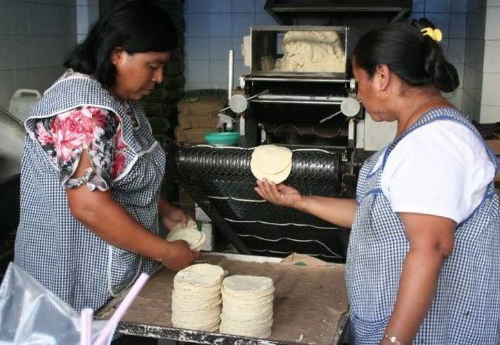 Gruma podría establecer en Nicaragua su propia planta de procesamiento de harina de maíz. (SIPSE/Contexto)