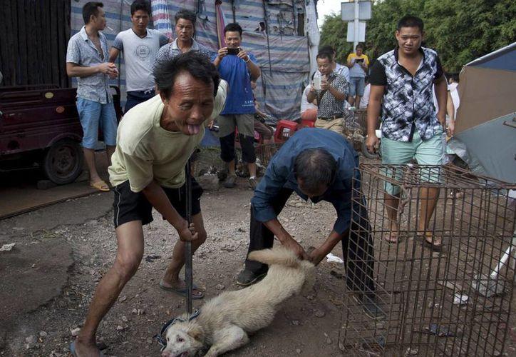 El festival se lleva a cabo desde 1995 para celebrar el inicio del verano, y reúne a cientos de miles de comensales que consumen carne de perro. (EFE)
