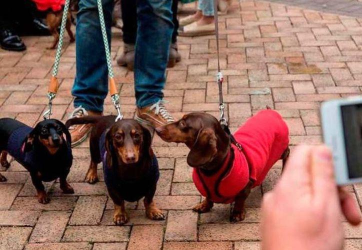 """Se cree que los canes son una mezcla con otras razas, y el caso conmocionó al país al tratarse de perros considerados como """"inofensivos"""". (AFP)"""