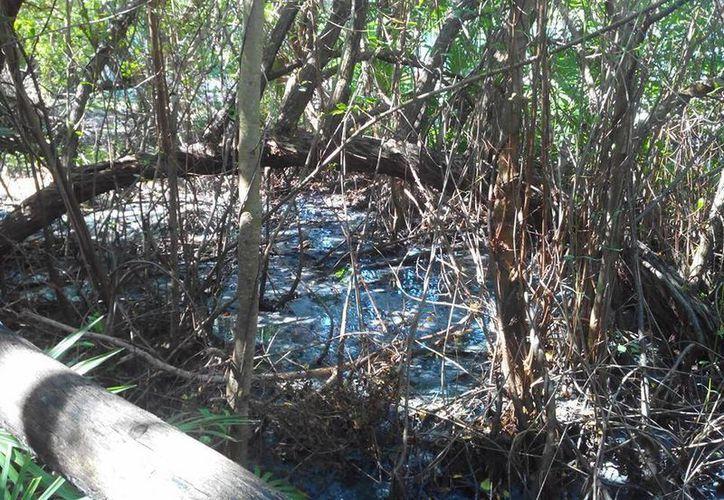 Autoridades le darán prioridad a las necesidades de la población; revisarán la situación de los manglares. (Israel Leal/SIPSE)