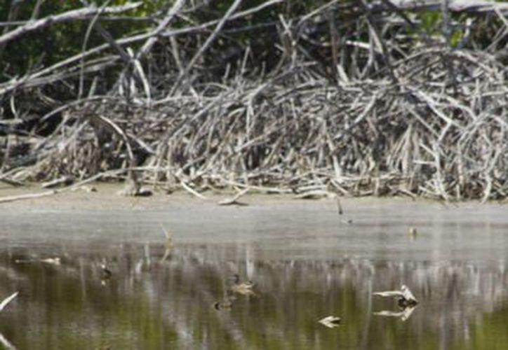 Los turistas visitarán áreas de la biosfera de Sian Ka'an. (Archivo/SIPSE)