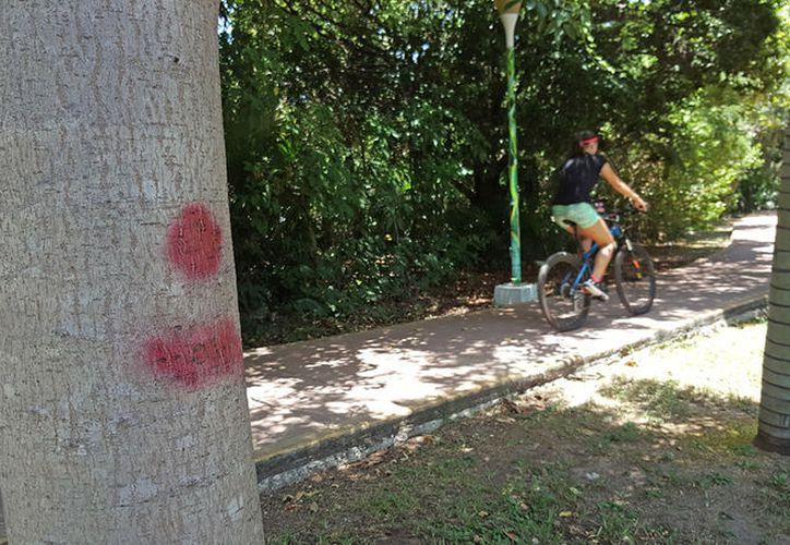 La zona arbolada del camellón crea el ambiente idóneo para las actividades al aire libre. (Eva Murillo/SIPSE)