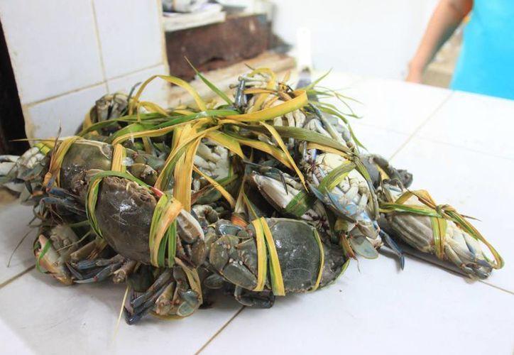 Se mantiene la vigilancia en las 15 pescaderías formales de Chetumal. (Enrique Mena/SIPSE)