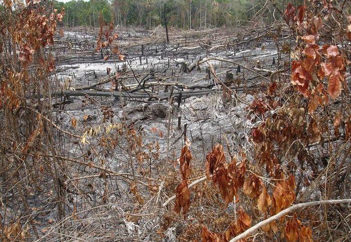 Quintana Roo, está buscando como contribuir para bajar a tasa cero los índices de afectación. (Juan Rodríguez/ SIPSE)