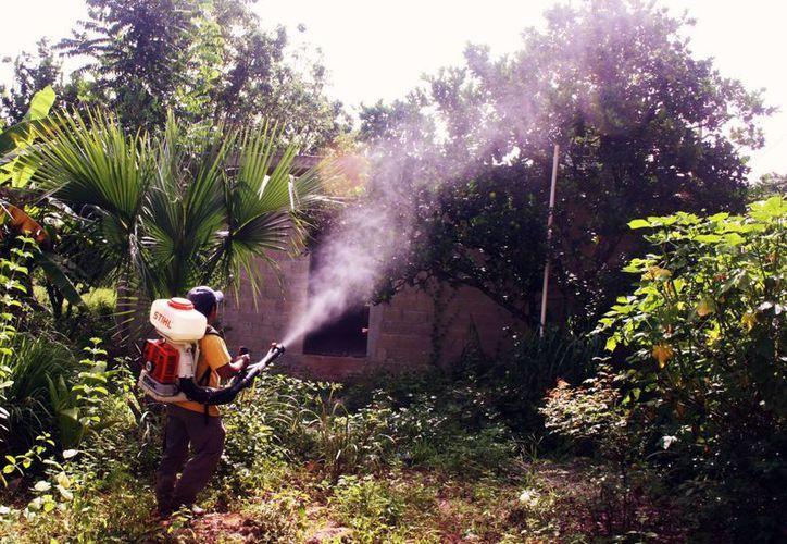 Recorren los traspatios para fumigar los árboles. (Milenio Novedades)
