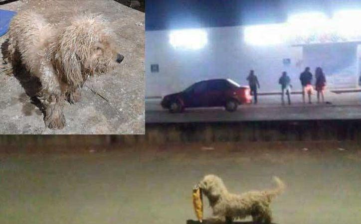 Max, es el perrito saqueador más famoso de Facebook. (Línea de fuego Chetumal/Facebook)