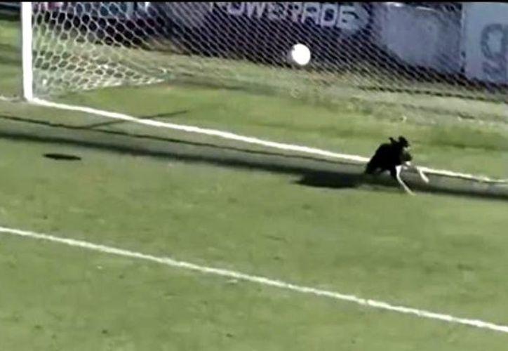 Cuando la pelota se dirigía sin problemas al fondo de las redes, el can se encargó de sacarla. (Debate)