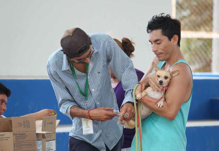 Vacunarán a las mascotas que no recibieron la dosis en la campaña pasada. (Octavio  Martínez/SIPSE)