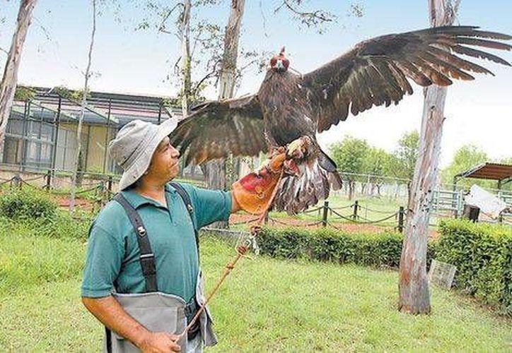 Al sitio llegan individuos de 12 especies de la entidad, algunas amenazadas, como es el águila real. (Javier Ríos/Milenio)