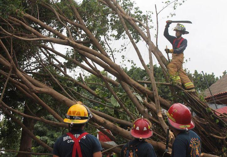 El Cuerpo de Bomberos y Servicios Públicos municipales se unieron a las llamadas de emergencia para remover los troncos. (Hugo Zúñiga/SIPSE)