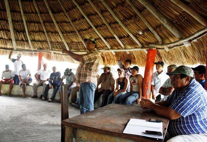 Los productores ganaderos aparentemente no lograron cumplir con determinados requisitos. (Edgardo Rodríguez/SIPSE)