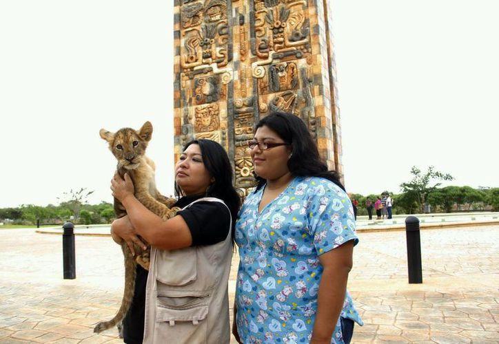 Animaya cuenta ya con un hospital para animales. (SIPSE)