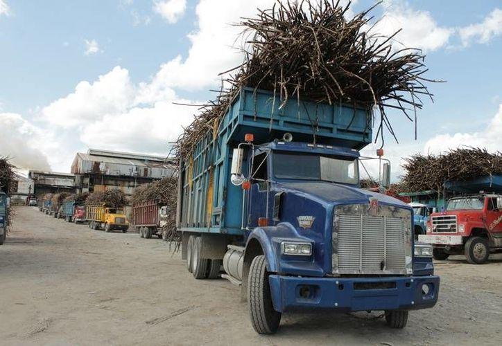 Diariamente van llegando uno a uno los camiones cargados. (Edgardo Rodríguez/SIPSE)