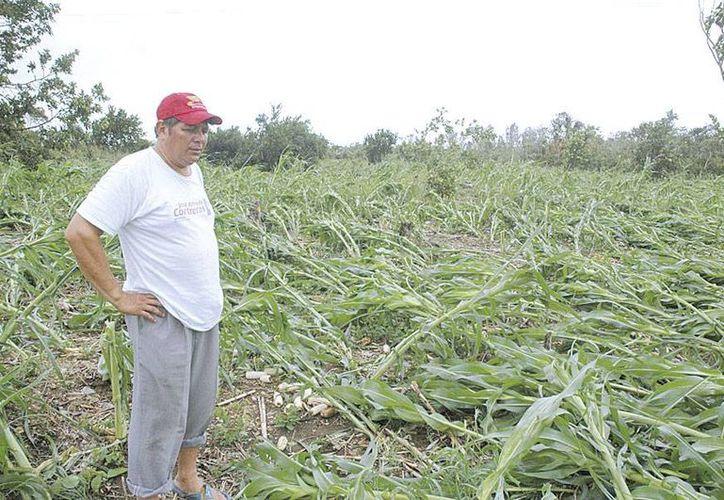 La inusual sequedad también causaría estragos con cultivos de frijol, chihua y chile jalapeño. (Redacción/SIPSE)